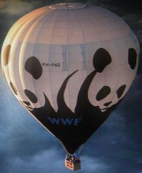 Wwf 1